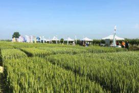 «Giornata del grano 2018» organizzata a Coccolia (RA) presso l'azienda «Gallignani» dal Consorzio agrario di Ravenna