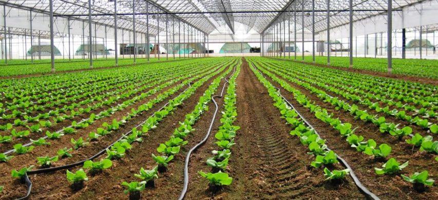 Impianto fertirrigazione coltura protetta