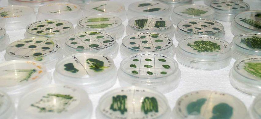 Capsule Petri