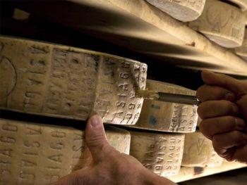 Forme di formaggio Asiago