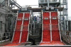 Lavorazione del pomodoro da industria
