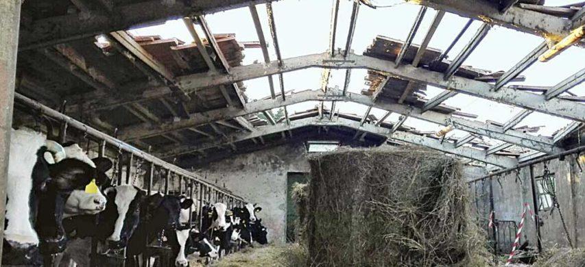 Stalla danneggiata dal terremoto