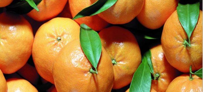 piccoli agrumi, mandarini ciaculli