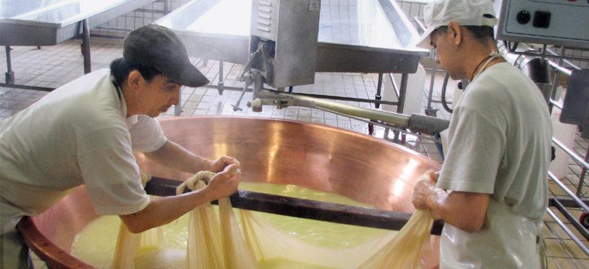 lavorazione formaggio grana