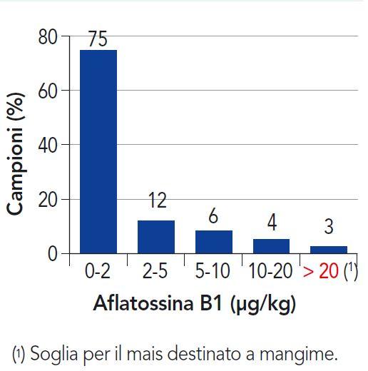 Distribuzione del contenuto di aflatossina B1 in campioni di mais (2018)