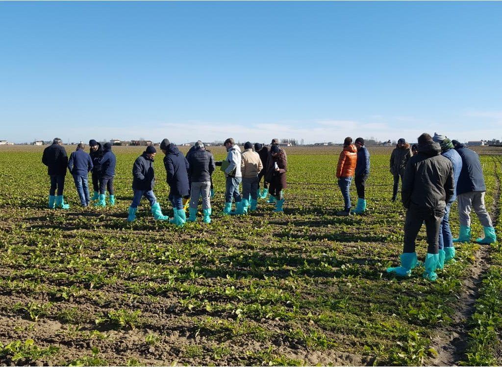 I visitatori in campo durante EnergyBeet 2019 ad Eraclea (Venezia)
