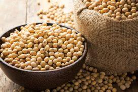 semi di soia
