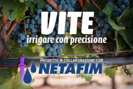 Vite, irrigare con precisione - Progetto in collaborazione con Netafim