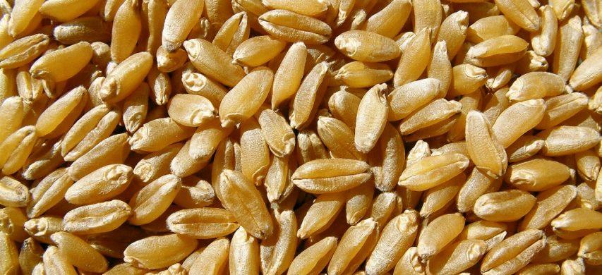 granella frumento