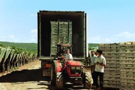 camion di uva da tavola