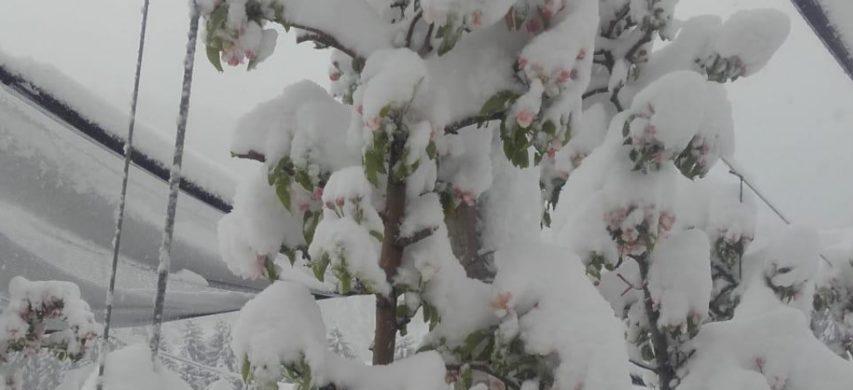 frutteto con neve