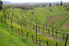 vigneti Collio Friuli