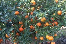 Clementine Caffin