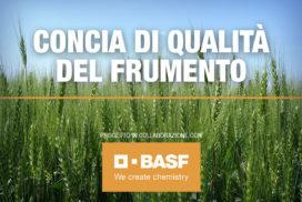 Progetto Concia di qualità del frumento