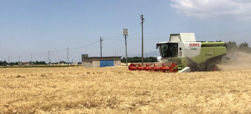 Raccolta grano duro a Foggia
