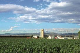agricoltura usa
