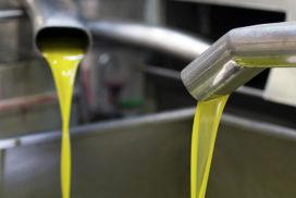 estrazione olio di oliva