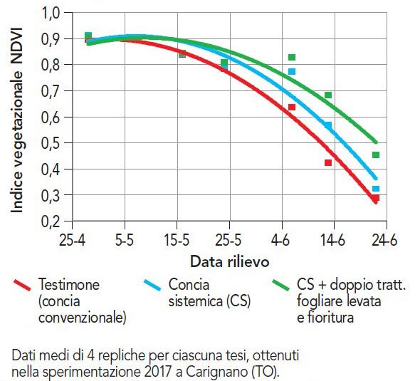 Frumento effetto concia sistemica e difesa fungicida su evoluzione indice NDVI