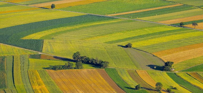 paesaggio coltivato