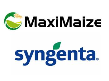 MaxiMaize Syngenta
