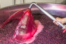 Assoenologi vino