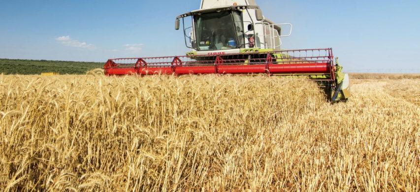 raccolta grano duro