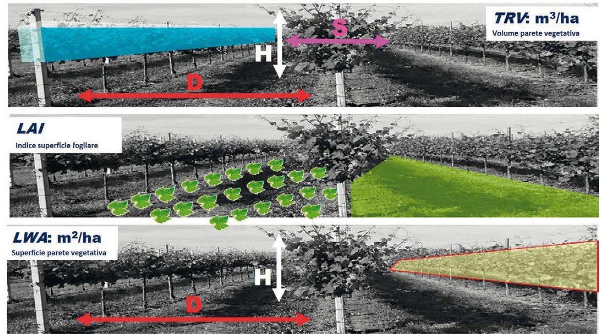 quantificazione parametri biometrici colture arboree
