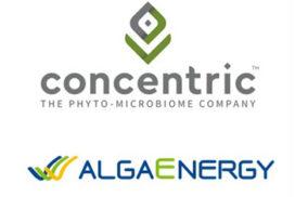 Concentric e Alcgaenergy