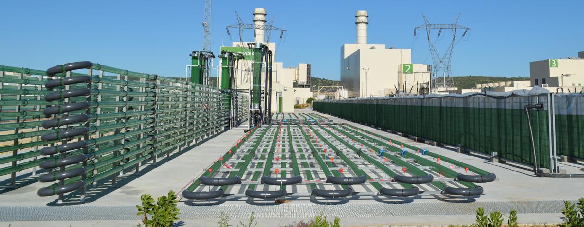 Algaenergy impianto di Arcos de la Frontera