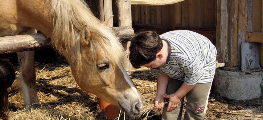 cavallo bambino